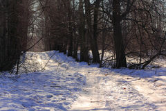 Winter Tree Lined Lane. On a sunny day Royalty Free Stock Photo