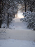 Winter Tree Lined Lane Royalty Free Stock Photos