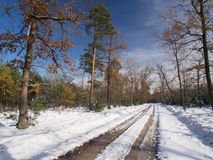 Winter Tree Lined Lane Royalty Free Stock Photography