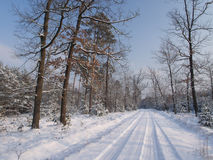 Winter Tree Lined Lane Royalty Free Stock Photo