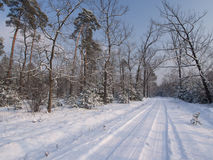 Winter Tree Lined Lane Royalty Free Stock Images