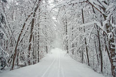 Winter Tree Lined Road with Snow Royalty Free Stock Images