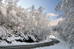 Winter Tree Lined Road with Snow Stock Images