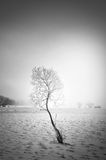 Winter tree Royalty Free Stock Photo