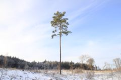 Winter tree Royalty Free Stock Photos