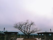 Winter tree. A lonely tree in the middle of a gloomy california day Royalty Free Stock Photo