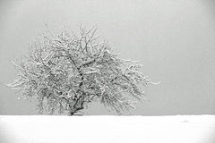 Tree. Winter tree with a lot of snow Stock Photography
