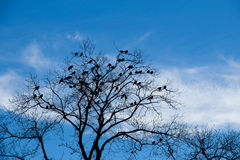 Winter tree with lots of birds against blue sky Stock Photography