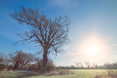 Winter Tree with Low Sun Royalty Free Stock Photos