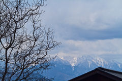 Winter tree and mountains. Stock Images