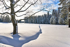 Winter tree near forest Royalty Free Stock Photo