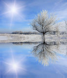 Winter tree near frozen lake Stock Images