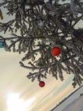 Winter tree new year royalty free stock image