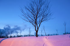 Winter tree by night Royalty Free Stock Images