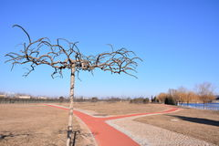Winter tree. This is the winter tree, no leaves, showing the vicissitudes of beauty, with red Park trails, forming a beautiful landscape Stock Image