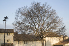 Winter Tree on Palais des Papes Square, Avignon Royalty Free Stock Photo