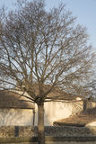 Winter Tree on Palais des Papes Square, Avignon Royalty Free Stock Image
