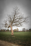 Winter tree in a park Stock Photography