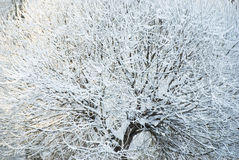 Winter tree. In the park Stock Image