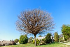 Winter bare tree, only branches stock photos
