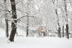 Winter Tree Park Royalty Free Stock Photography