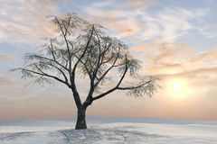 Winter Tree Pastel Sunrise Royalty Free Stock Images