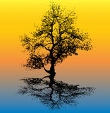 Winter Tree Reflection. Illustration of tree silhouette with a reflection, vector format available Royalty Free Stock Photography