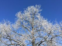 A winter tree with rime and the blue sky Royalty Free Stock Images