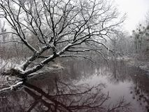 Winter tree on the river Stock Image