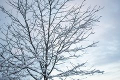 Winter Tree Scene with Snowy Branches stock photo