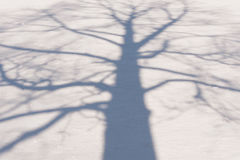 Winter Tree Shadow 2 Stock Image