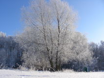 Winter tree and shrubbery, bushes and grass covered with hoarfrost, ice and layers of snow Stock Photo
