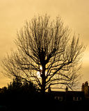 Winter Tree Silhouette Against Sunset A Royalty Free Stock Photography