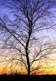 Winter Tree Silhouette And A Sunset
