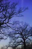 Winter tree silhouettes. Naked winter trees against clear blue sky Stock Photos