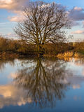 Winter Tree Sky Clouds Water Reflections Royalty Free Stock Photos