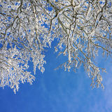 Winter tree and sky Stock Photo