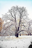 Winter tree on snow Royalty Free Stock Photography