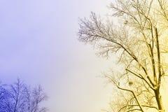 Winter tree with snow Stock Photos