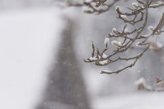 Winter Tree,snow fall,in Toyama,,Japan. I've taken the landscape of winter in Toyama Royalty Free Stock Photography