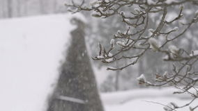 Winter Tree,snow fall,in Toyama,,Japan stock video footage