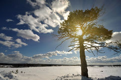 Winter tree on the snow field Stock Photos