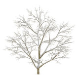 Winter tree on snow isolated Stock Images