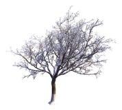 Winter Tree On Snow Isolated White 3D Illustration. 3D illustration Winter tree on snow isolated on white Royalty Free Stock Photos