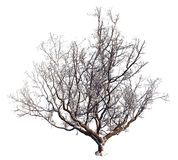 Winter Tree On Snow Isolated White 3D Illustration. 3D illustration Winter tree on snow isolated on white Royalty Free Stock Photography