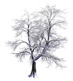 Winter Tree On Snow Isolated White 3D Illustration. 3D illustration Winter tree on snow isolated on white Stock Photography