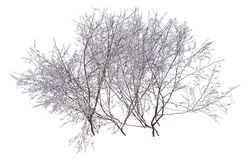 Winter Tree On Snow Isolated White 3D Illustration. 3D illustration Winter tree on snow isolated on white Stock Images