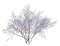 Winter Tree On Snow Isolated White 3D Illustration. 3D illustration Winter tree on snow isolated on white Royalty Free Stock Image