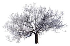 Winter Tree On Snow Isolated White 3D Illustration. 3D illustration Winter tree on snow isolated on white Stock Photos