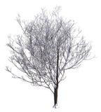 Winter Tree On Snow Isolated White 3D Illustration. 3D illustration Winter tree on snow isolated on white Stock Photo